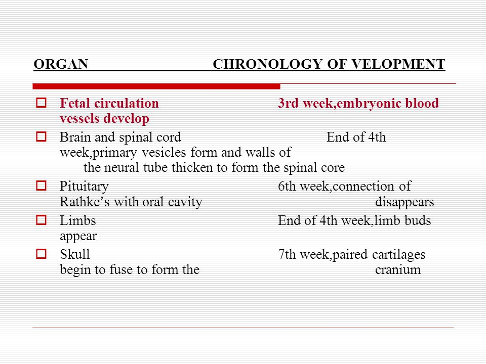 ORGAN CHRONOLOGY OF VELOPMENT  Fetal circulation3rd week,embryonic blood vessels develop  Brain and spinal cordEnd of 4th week,primary vesicles form and walls of the neural tube thicken to form the spinal core  Pituitary6th week,connection of Rathke's with oral cavity disappears  LimbsEnd of 4th week,limb buds appear  Skull7th week,paired cartilages begin to fuse to form the cranium