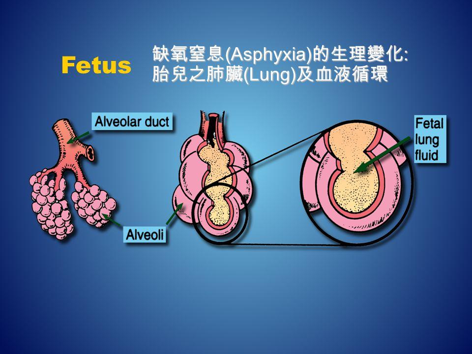 缺氧窒息 (Asphyxia) 的生理變化 : 胎兒之肺臟 (Lung) 及血液循環 Fetus