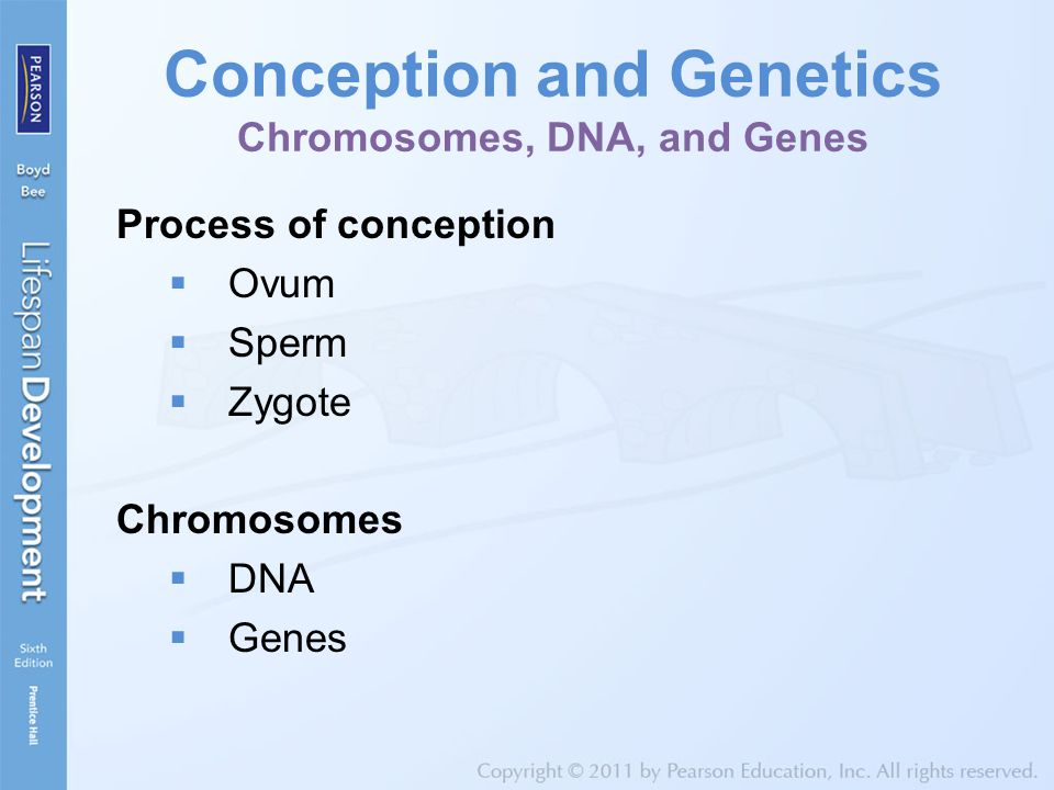 Conception and Genetics Chromosomes, DNA, and Genes Process of conception  Ovum  Sperm  Zygote Chromosomes  DNA  Genes