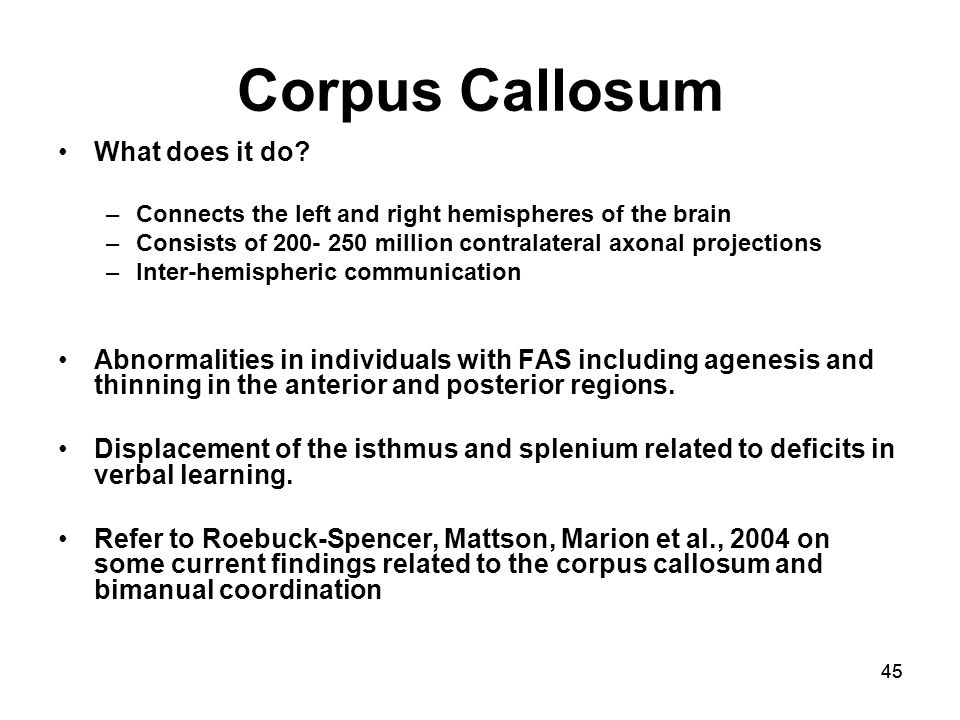 45 Corpus Callosum What does it do.