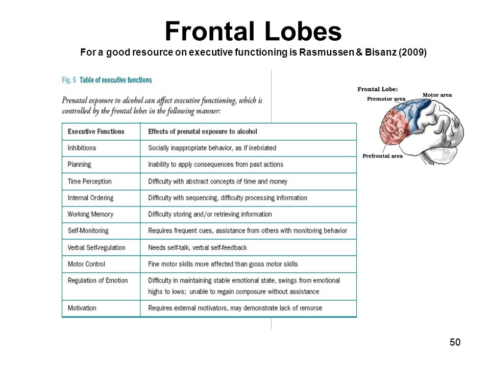 50 Frontal Lobes For a good resource on executive functioning is Rasmussen & Bisanz (2009)
