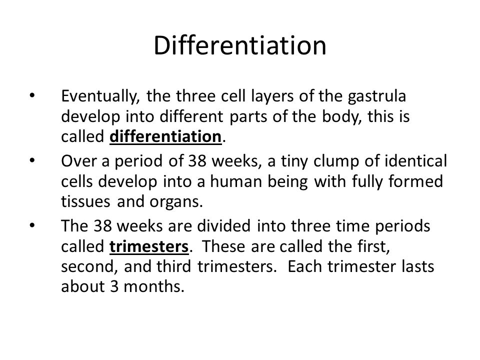 Differentiation Eventually, the three cell layers of the gastrula develop into different parts of the body, this is called differentiation. Over a per