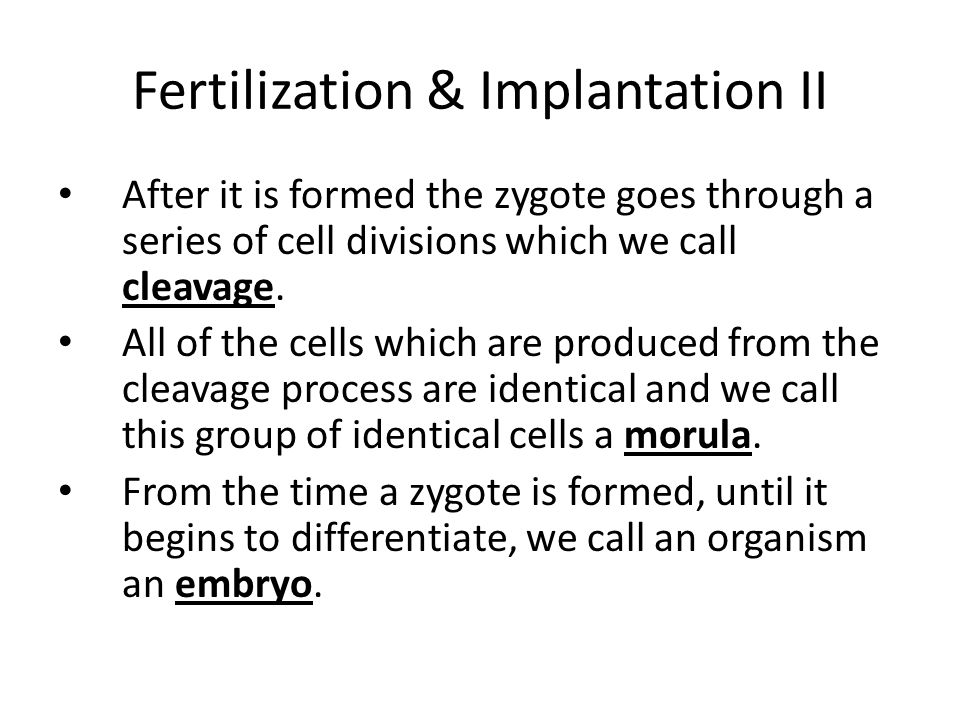 Fertilization & Implantation II By the time the embryo reaches the uterus it has formed into a hollow ball of cells called a blastocyst.