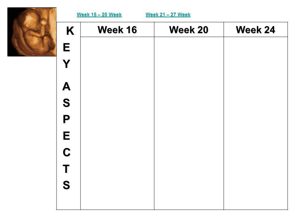 K E Y A S P E C T S Week 16 Week 20 Week 24 Week 15 – 20 Week 15 – 20 Week 21 – 27 Week 21 – 27 Week