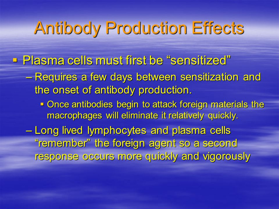 "Antibody Production Effects  Plasma cells must first be ""sensitized"" –Requires a few days between sensitization and the onset of antibody production."