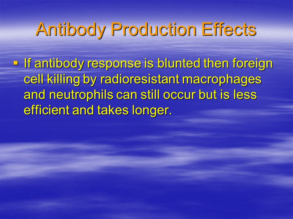 Antibody Production Effects  If antibody response is blunted then foreign cell killing by radioresistant macrophages and neutrophils can still occur but is less efficient and takes longer.