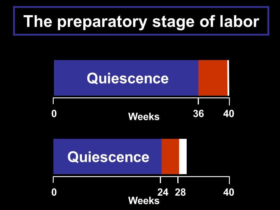 Quiescence Weeks 03640 Quiescence Weeks 0244028 The preparatory stage of labor