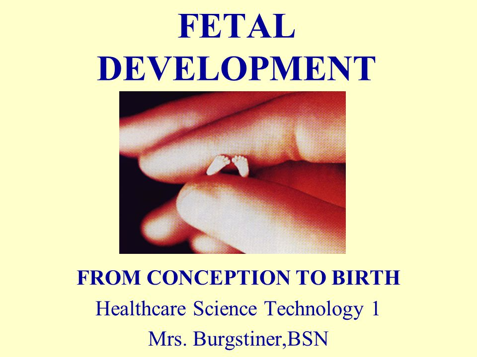 FETAL DEVELOPMENT FROM CONCEPTION TO BIRTH Healthcare Science Technology 1 Mrs. Burgstiner,BSN