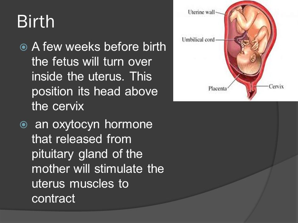 Birth  A few weeks before birth the fetus will turn over inside the uterus.
