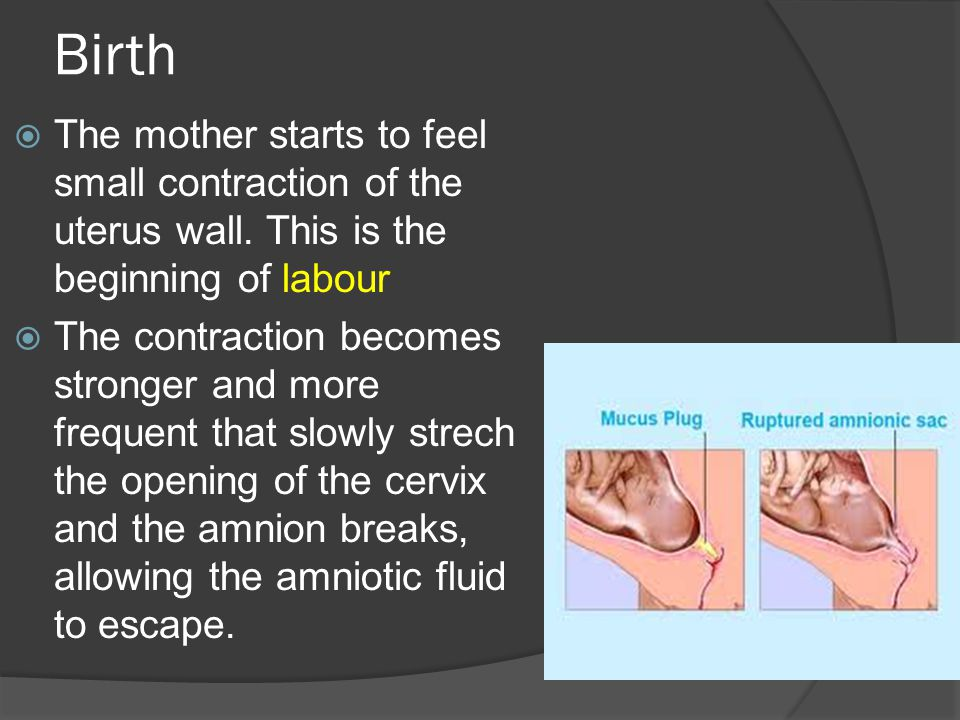 Birth  The mother starts to feel small contraction of the uterus wall.