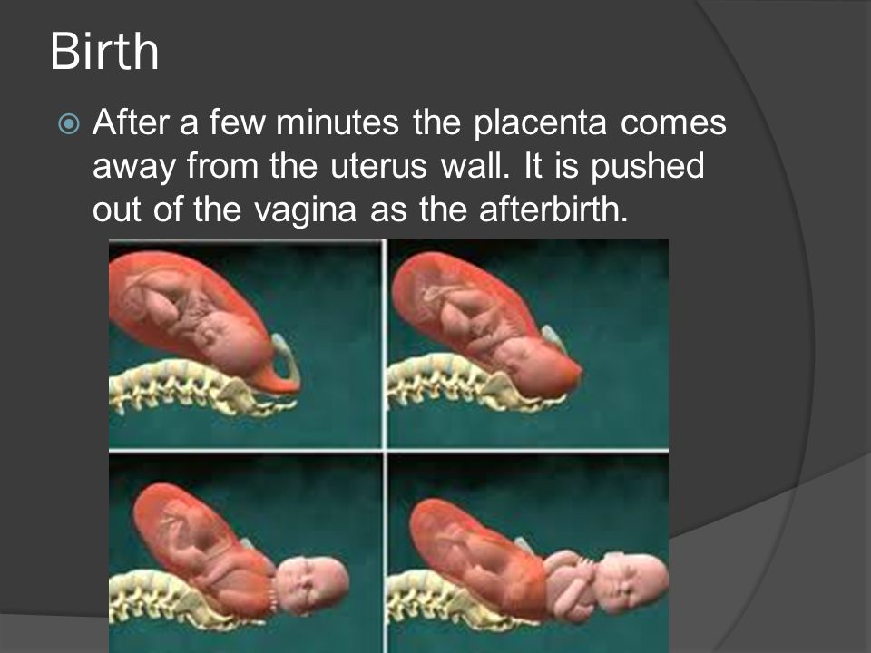 Birth  After a few minutes the placenta comes away from the uterus wall.
