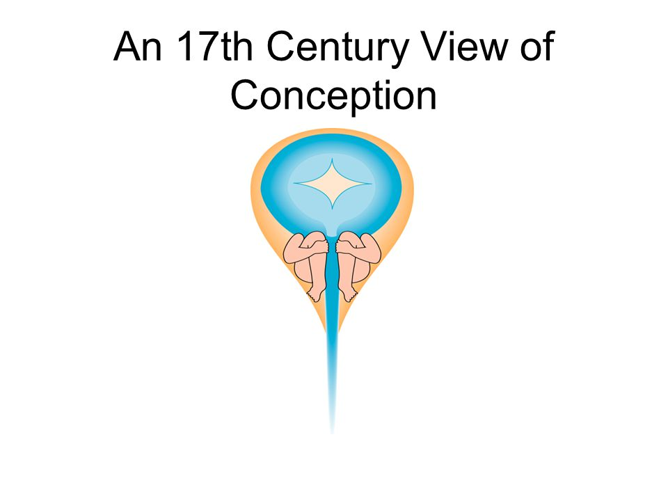 An 17th Century View of Conception