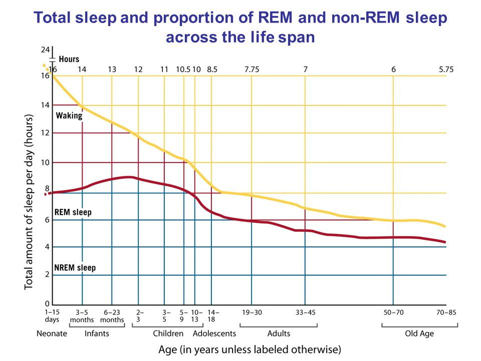 Total sleep and proportion of REM and non-REM sleep across the life span