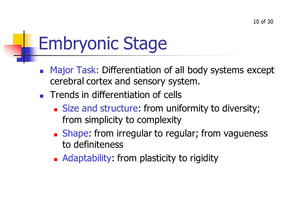 Part 2: Embryonic Stage