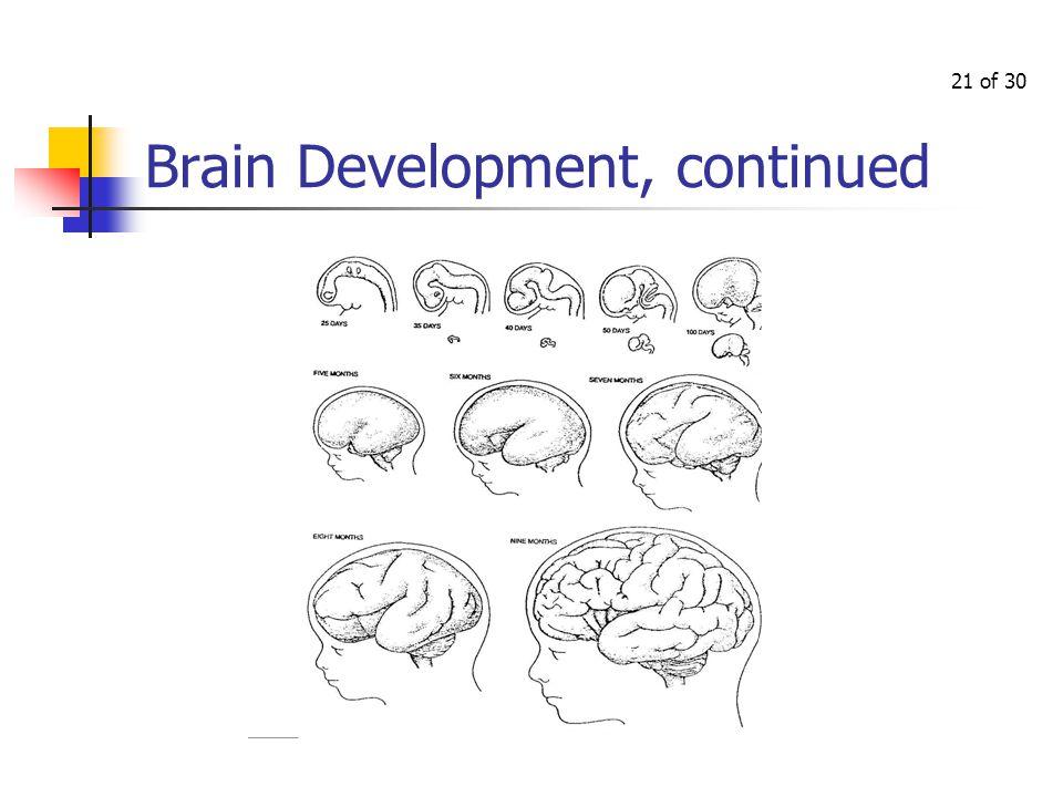 20 of 30 Brain Development
