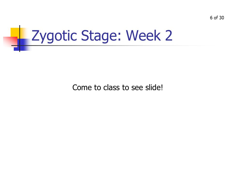 5 of 30 Zygotic Stage, continued Zygote develops from an area of blastocyst called the embryonic disk At 2 weeks, the embryonic disk as 3 layers: Entoderm: from which develops pharynx, tonsils, thyroid, trachea, lungs, digestive system, bladder, urethra Mesoderm: from which develops muscles, bones, circulatory system, lymph system, kidneys, gonads Ectoderm: from which develops skin, hair, nails, sense organs, nervous tissue