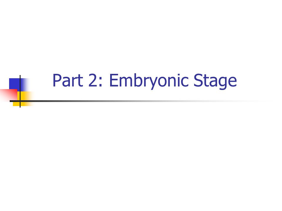 8 of 30 Critical Periods of Various Embryonic Structures