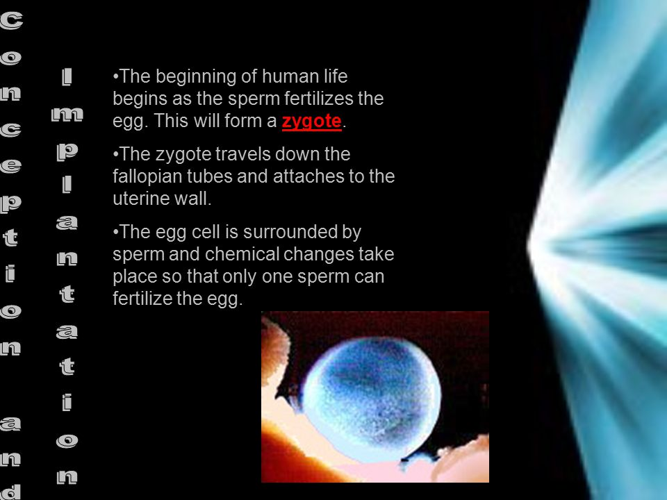 The beginning of human life begins as the sperm fertilizes the egg.