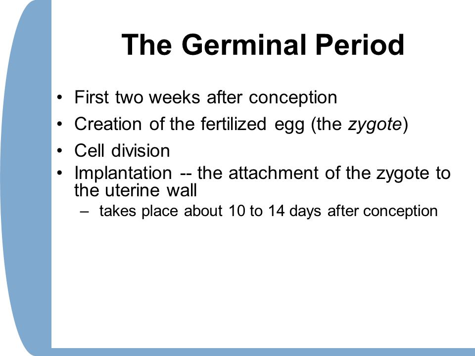 The Germinal Period First two weeks after conception Creation of the fertilized egg (the zygote) Cell division Implantation -- the attachment of the z