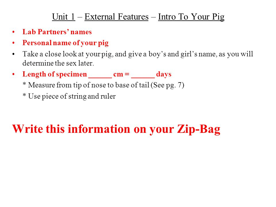 Unit 1 – External Features – Intro To Your Pig Lab Partners' names Personal name of your pig Take a close look at your pig, and give a boy's and girl'