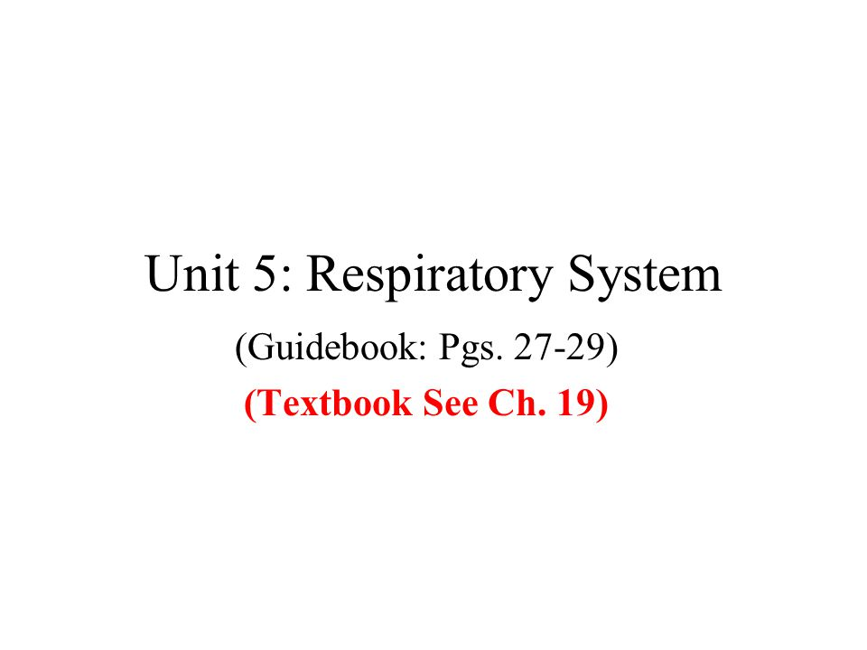 Unit 5: Respiratory System (Guidebook: Pgs. 27-29) (Textbook See Ch. 19)