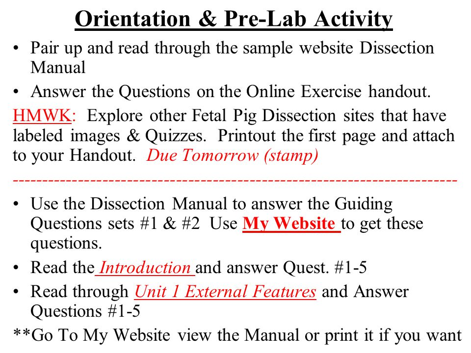 Orientation & Pre-Lab Activity Pair up and read through the sample website Dissection Manual Answer the Questions on the Online Exercise handout. HMWK