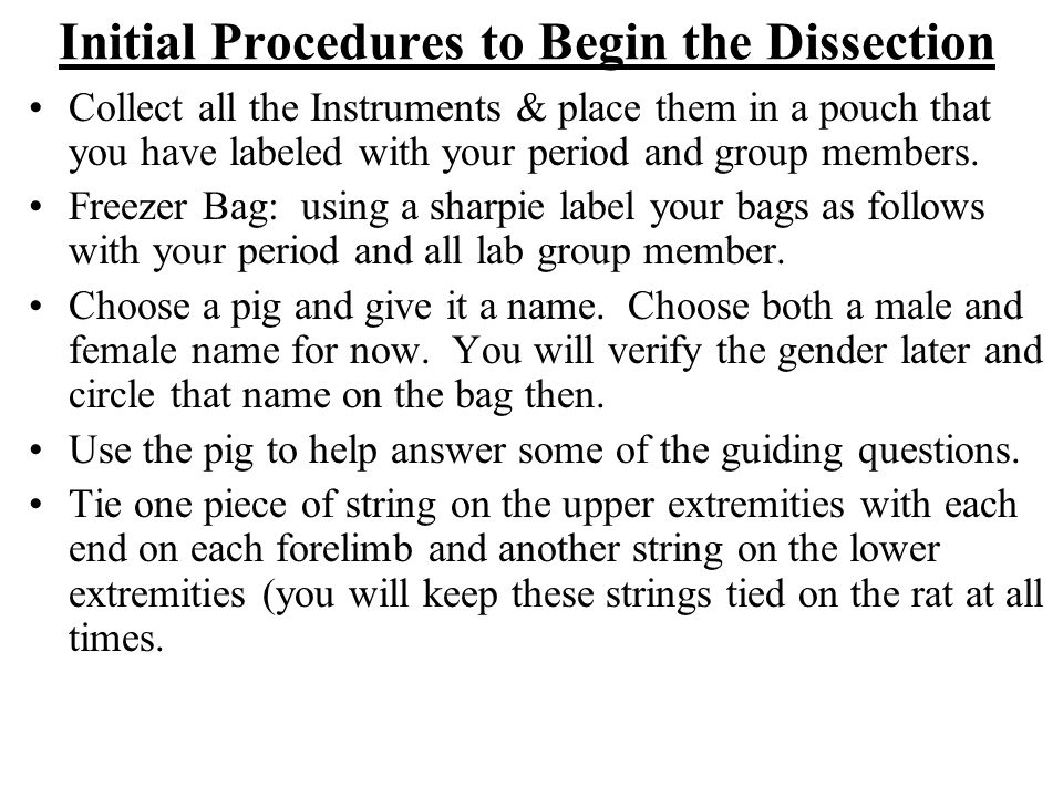 Initial Procedures to Begin the Dissection Collect all the Instruments & place them in a pouch that you have labeled with your period and group member