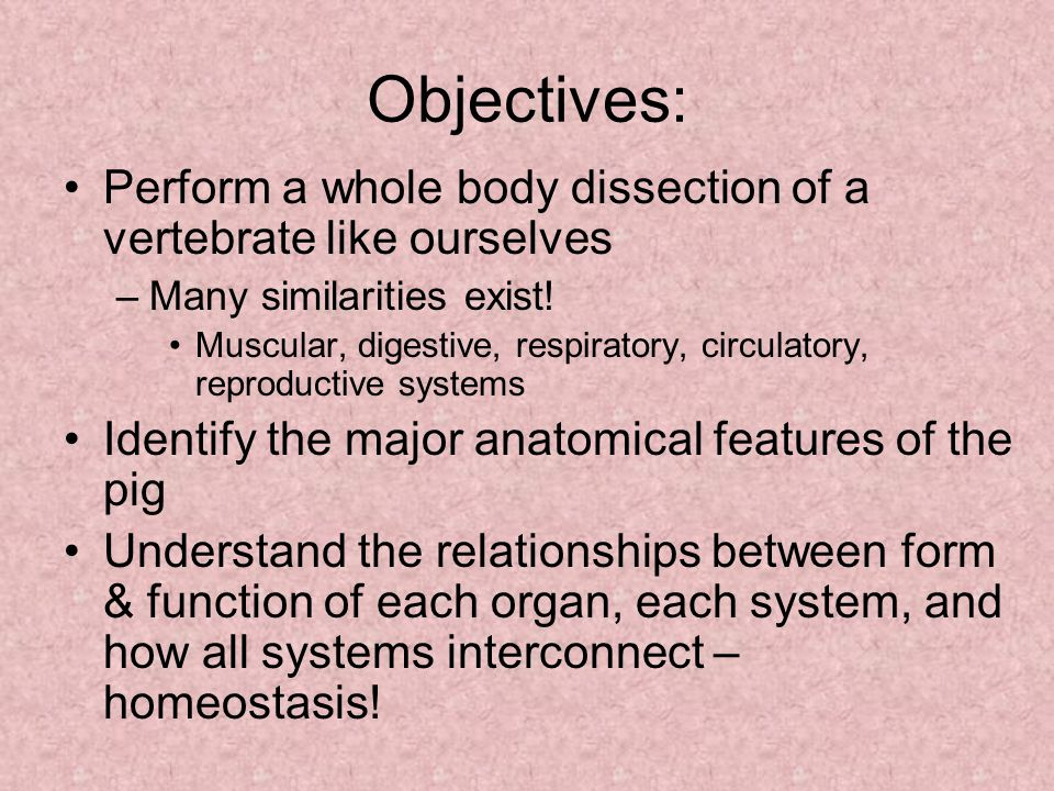 Objectives: Perform a whole body dissection of a vertebrate like ourselves –Many similarities exist.