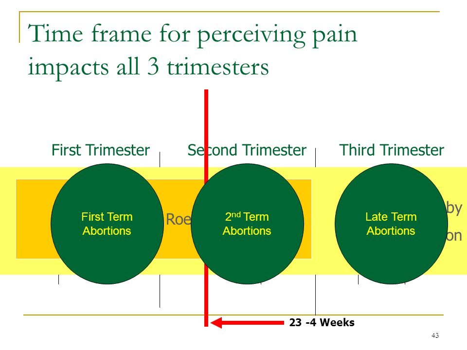 43 Time frame for perceiving pain impacts all 3 trimesters Conception 23 -4 Weeks Birth First TrimesterSecond TrimesterThird Trimester Protected by Doe V.