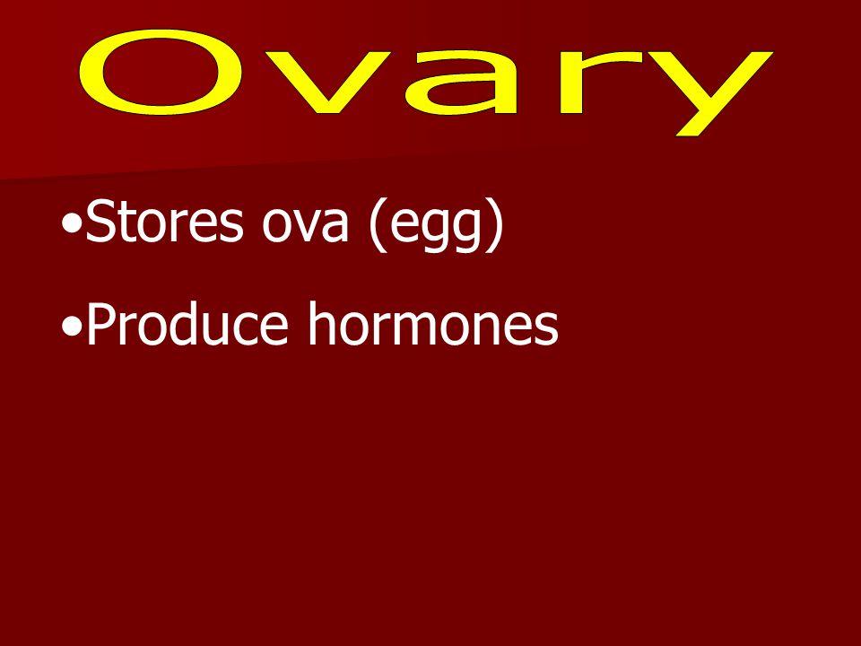 Stores ova (egg) Produce hormones