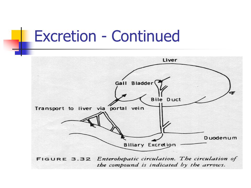 Excretion - Continued