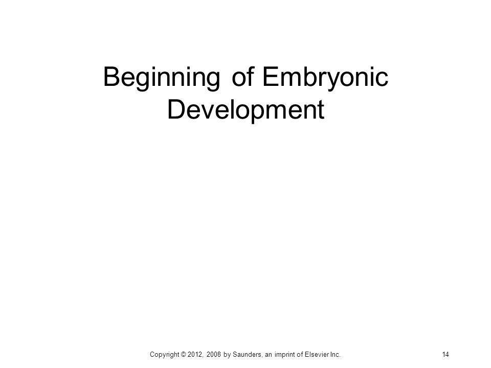Beginning of Embryonic Development Copyright © 2012, 2008 by Saunders, an imprint of Elsevier Inc. 14