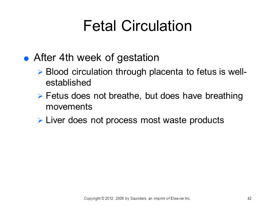 Fetal Circulation  After 4th week of gestation  Blood circulation through placenta to fetus is well- established  Fetus does not breathe, but does