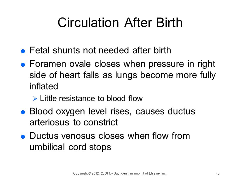 Circulation After Birth  Fetal shunts not needed after birth  Foramen ovale closes when pressure in right side of heart falls as lungs become more f
