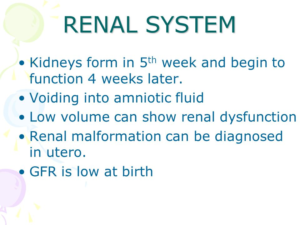 RENAL SYSTEM Kidneys form in 5 th week and begin to function 4 weeks later.
