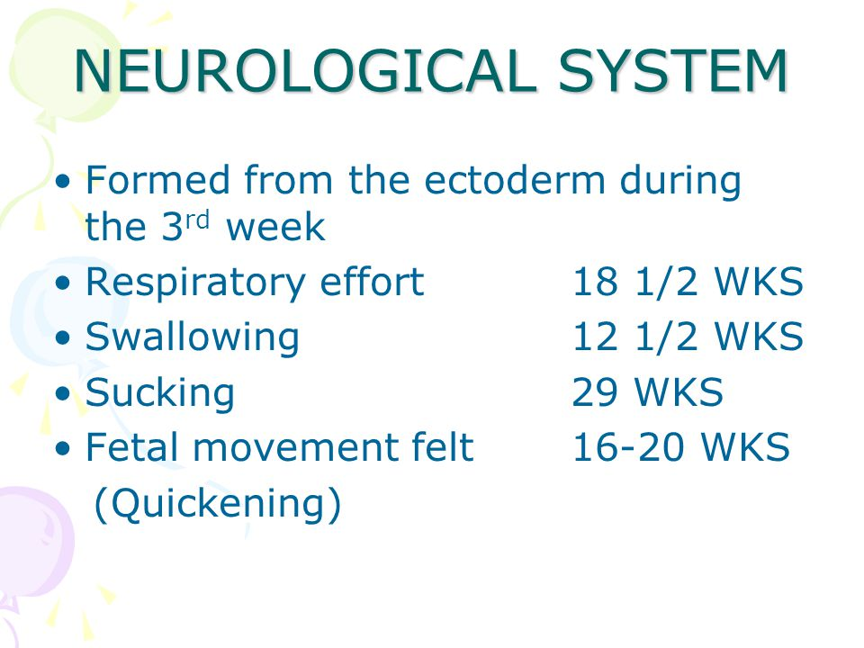 NEUROLOGICAL SYSTEM Formed from the ectoderm during the 3 rd week Respiratory effort18 1/2 WKS Swallowing 12 1/2 WKS Sucking29 WKS Fetal movement felt16-20 WKS (Quickening)