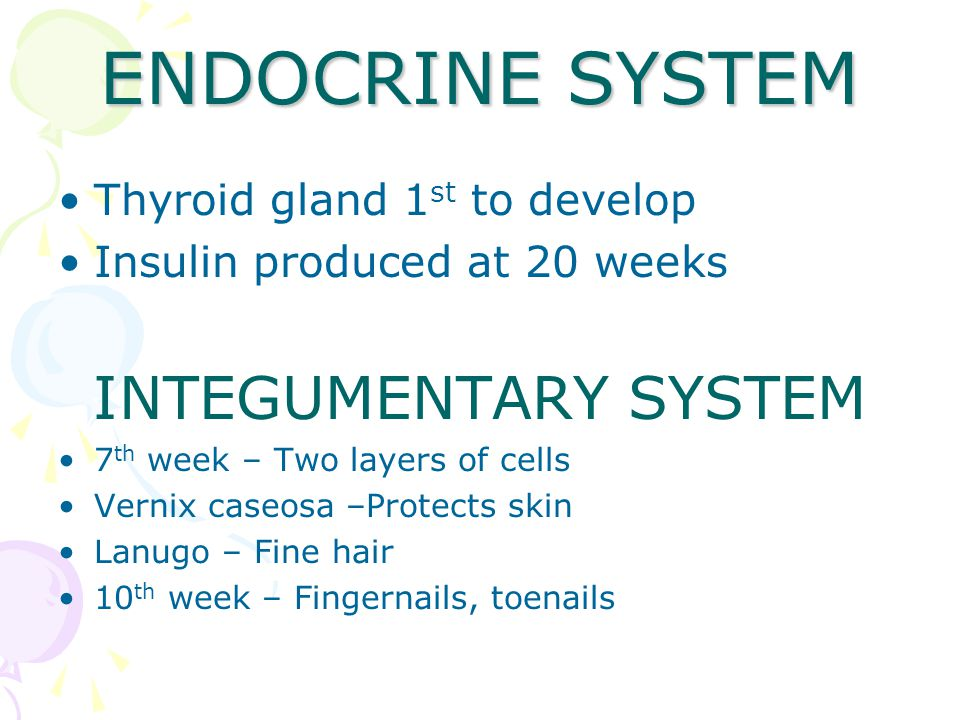 ENDOCRINE SYSTEM Thyroid gland 1 st to develop Insulin produced at 20 weeks INTEGUMENTARY SYSTEM 7 th week – Two layers of cells Vernix caseosa –Protects skin Lanugo – Fine hair 10 th week – Fingernails, toenails