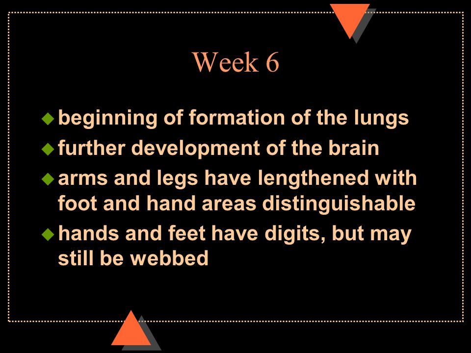 Week 6  beginning of formation of the lungs  further development of the brain  arms and legs have lengthened with foot and hand areas distinguishab