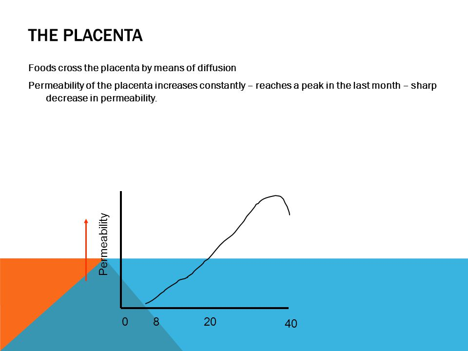 THE PLACENTA Foods cross the placenta by means of diffusion Permeability of the placenta increases constantly – reaches a peak in the last month – sharp decrease in permeability.