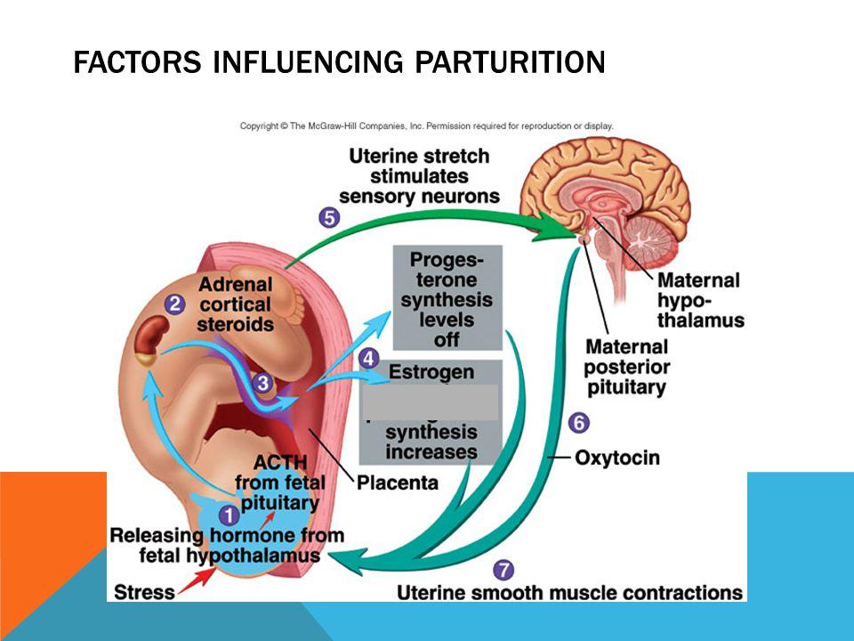 FACTORS INFLUENCING PARTURITION