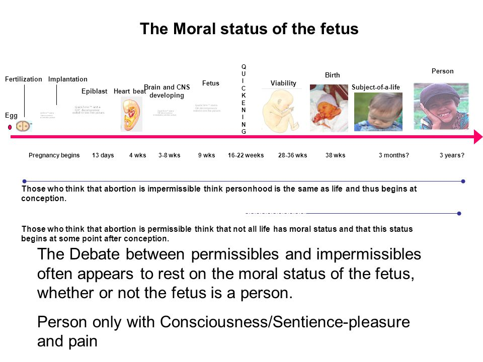 The Moral status of the fetus The Debate between permissibles and impermissibles often appears to rest on the moral status of the fetus, whether or not the fetus is a person.