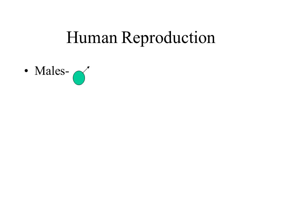 Human Reproduction Males-
