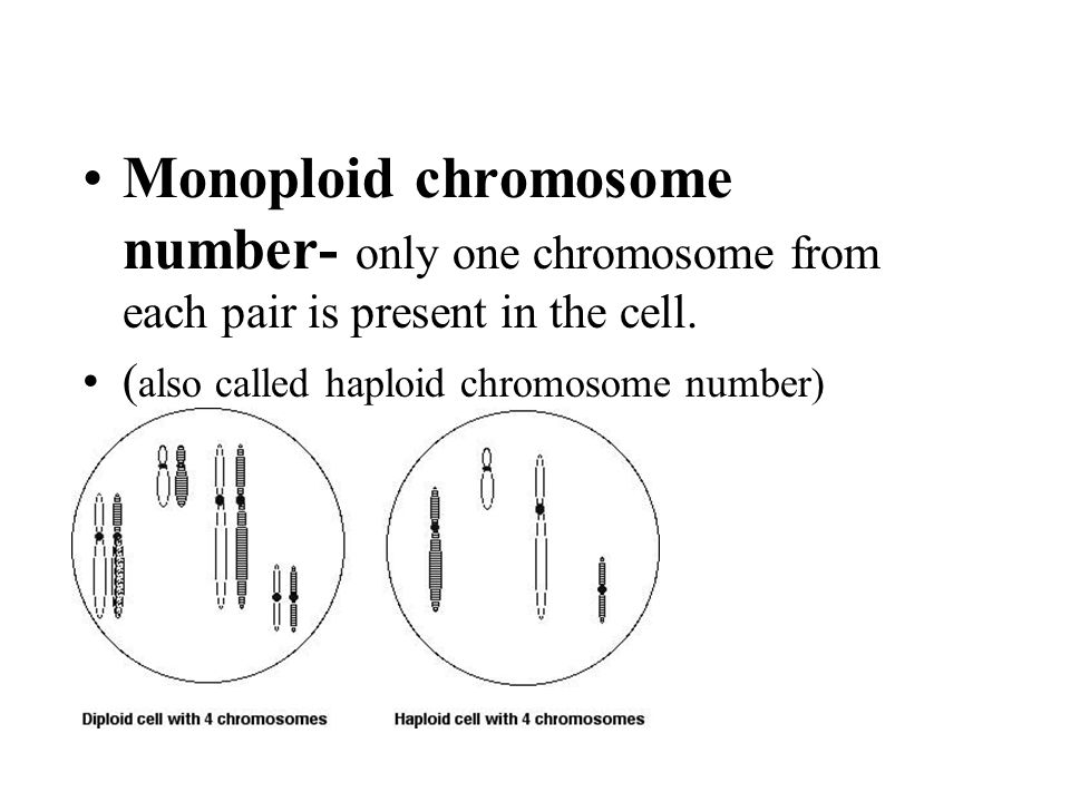 Monoploid chromosome number- only one chromosome from each pair is present in the cell. ( also called haploid chromosome number)