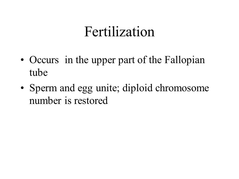 Fertilization Occurs in the upper part of the Fallopian tube Sperm and egg unite; diploid chromosome number is restored