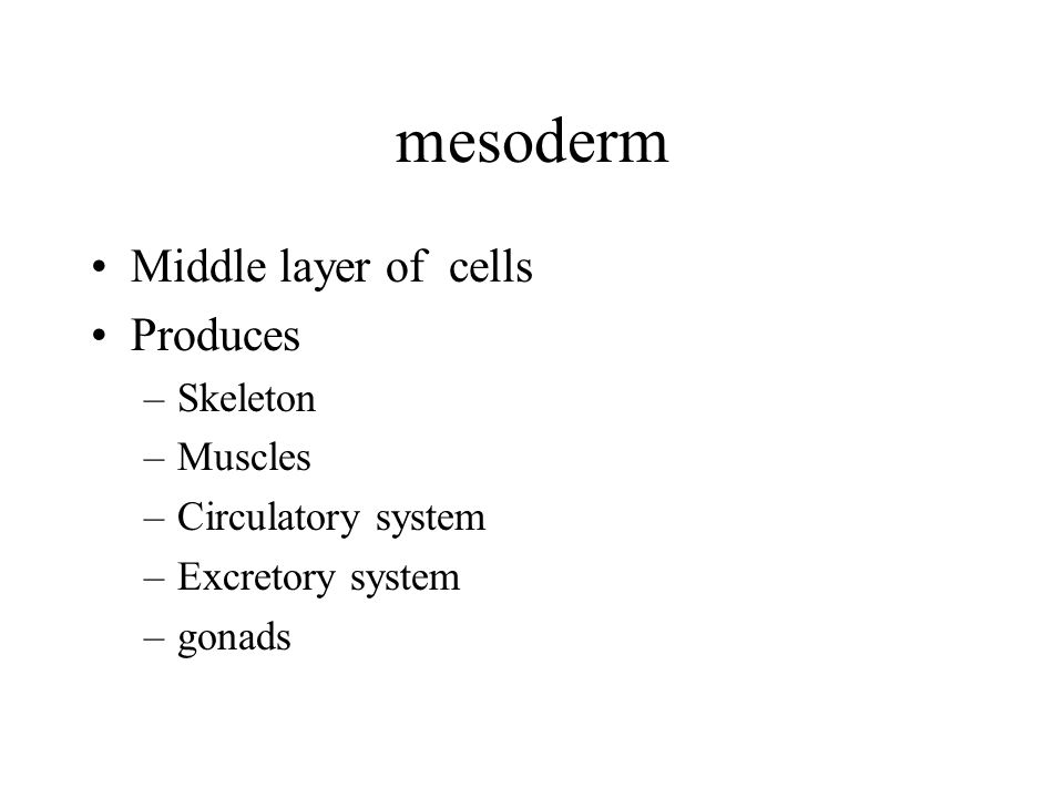 mesoderm Middle layer of cells Produces –Skeleton –Muscles –Circulatory system –Excretory system –gonads
