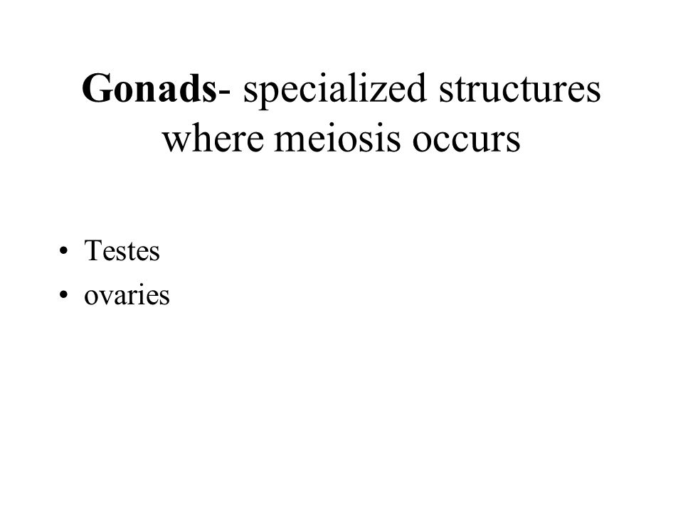 Gonads- specialized structures where meiosis occurs Testes ovaries