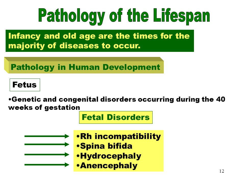 11 Death The end of life occurs when the heart, respiratory system and central nervous system stop functioning Today there are life support machines t