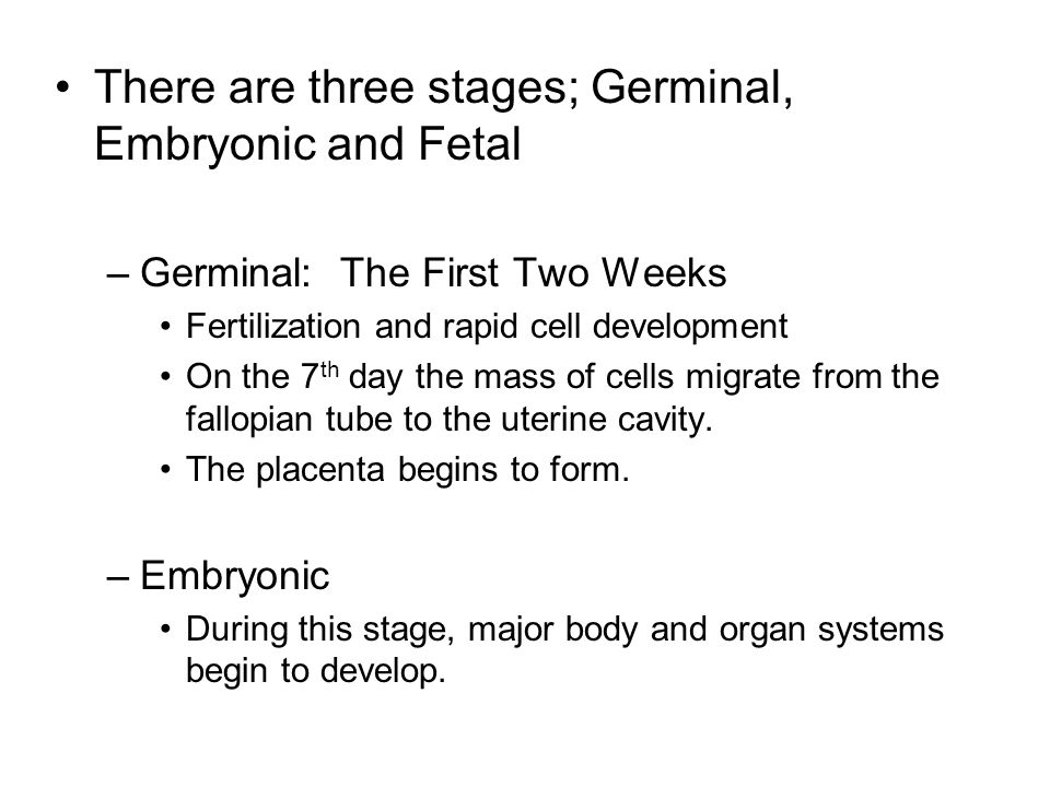 There are three stages; Germinal, Embryonic and Fetal –Germinal: The First Two Weeks Fertilization and rapid cell development On the 7 th day the mass