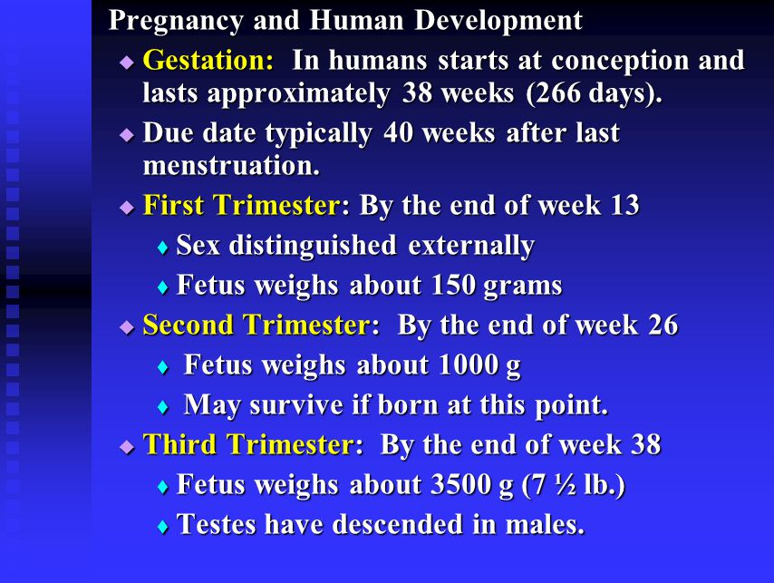 Pregnancy and Human Development  Gestation: In humans starts at conception and lasts approximately 38 weeks (266 days).  Due date typically 40 weeks