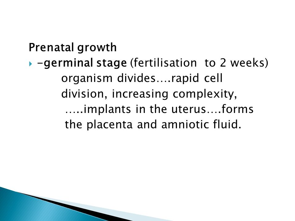 Prenatal growth  -germinal stage (fertilisation to 2 weeks) organism divides….rapid cell division, increasing complexity, …..implants in the uterus….
